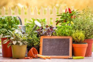 piante aromatiche naturali contro le zanzare