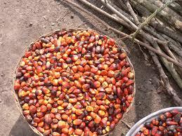 produzione olio di palma
