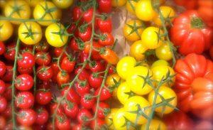 pomodori verdura di stagione maggio