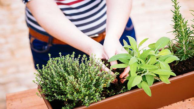 dieci erbe aromatiche da coltivare sul balcone