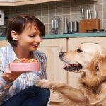 Gravidanza del cane, quale alimentazione?