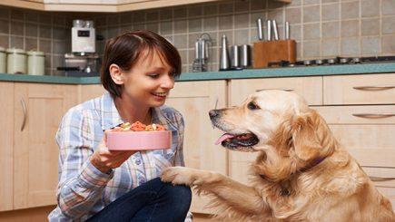 cane in gravidanza consigli su alimentazione corretta