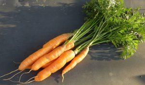 carote verdure di stagione di giugno