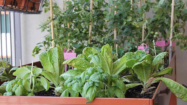 Come coltivare un orto sul balcone