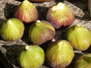 fichi frutta di stagione del mese di luglio