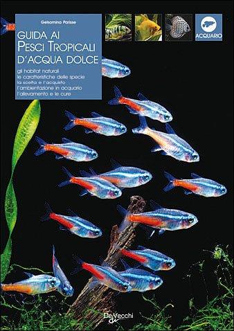 pesci facili per acquario guida all'acquisto