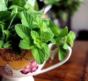 mentuccia pianta aromatica
