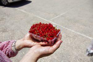 mirtillo rosso alimenti per combattere la cellulite