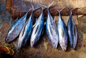 pesce azzurro alimenti per combattere la cellulite