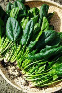 spinaci alimenti per combattere la cellulite