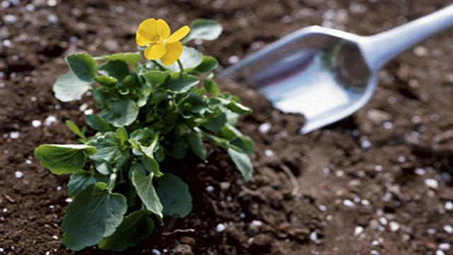 10 fertilizzanti naturali fai da te