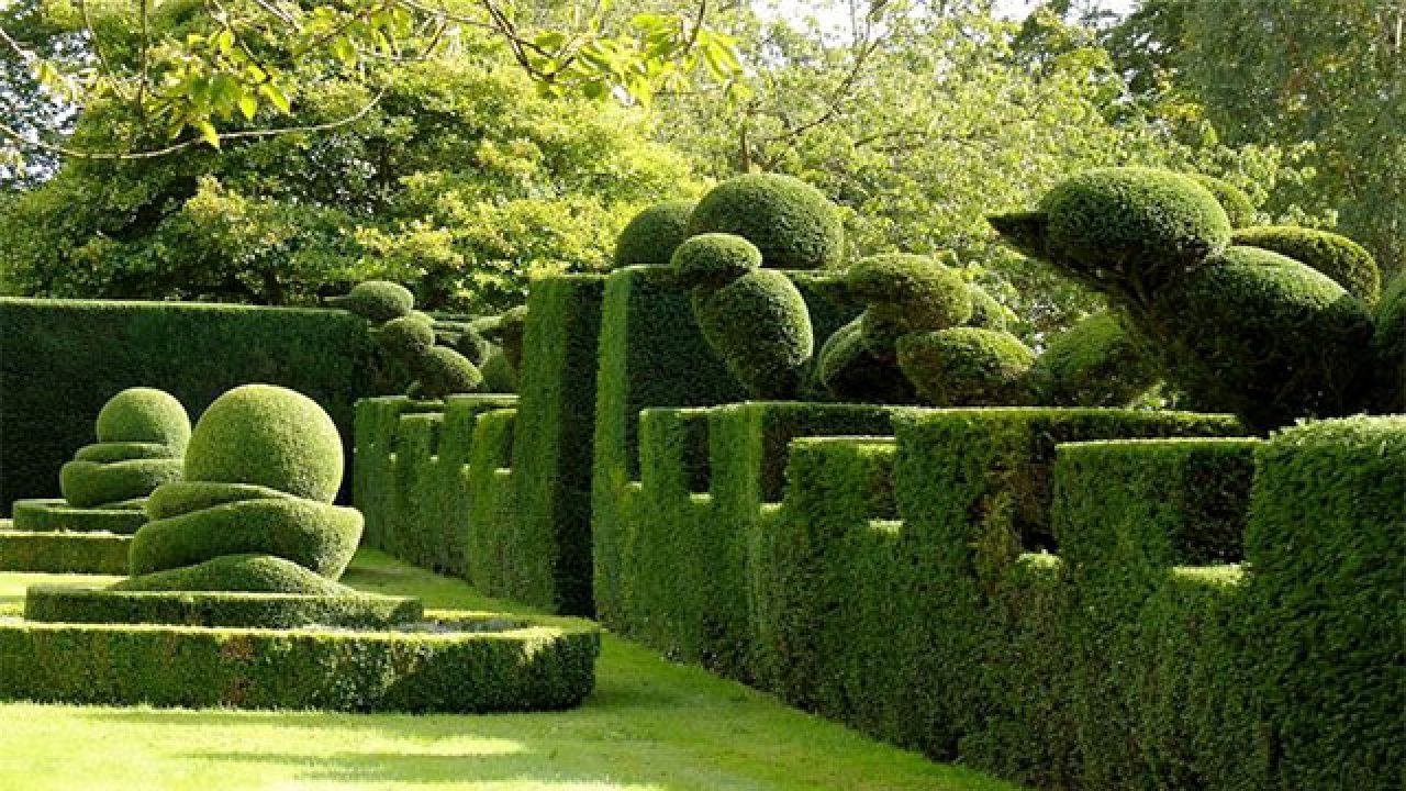 Piante Rampicanti Da Esterno 10 piante ideali per siepi da giardino