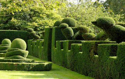 10-piante-ideali-per-siepi-da-giardino