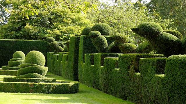 aiuole per giardino fiori e piante : 10-piante-ideali-per-siepi-da-giardino