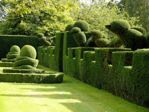 bosso siepe da giardino