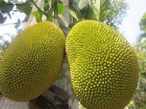 jackfruit è il cibo del futuro