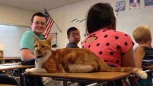 pet therapy gatti in classe insieme agli studenti per combattere ansia
