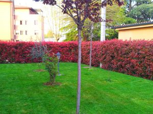 10 piante ideali per siepi da giardino for Piante da frutto a 1000 metri