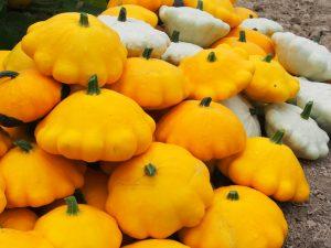zucchina patissone verdura di stagione di agosto