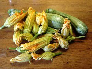 zucchine verdura di stagione di agosto