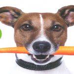 Un cane vivace e in salute? Stop a crocchette, solo BARF