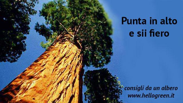 consigli da un albero per vivere in armonia con se stessi e con la natura
