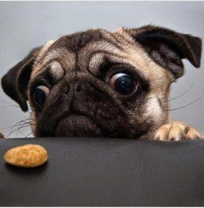 Biscotti per cani al bacon