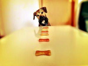 Biscotti per cani alla zucca