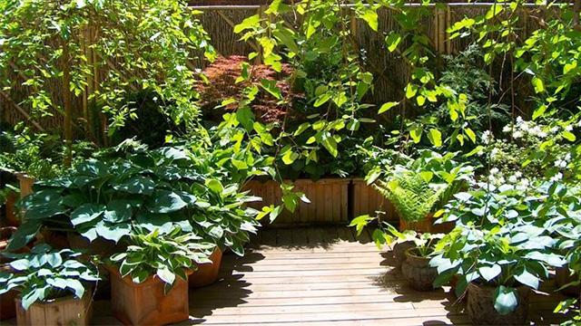 10 piante da balcone sempreverdi - Barriere antirumore per terrazzi ...