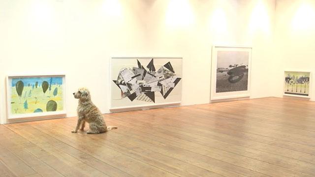 play more una mostra d'arte contemporanea per cani