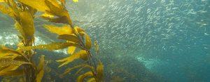 alghe per produrre biocarburante