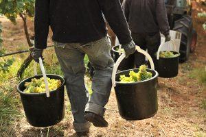 come si produce il vino biologico