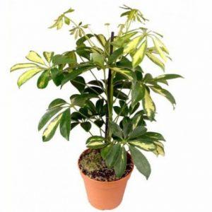 10 piante da balcone sempreverdi for Piante invernali da esterno