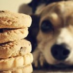 10 ricette di biscotti per cani fatti in casa