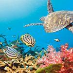 Obama istituisce la più grande riserva marina protetta del mondo