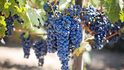 uva frutta di stagione settembre