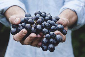 vino biologico che cos'è