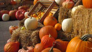 verdura di stagione di ottobre zucca ricette e proprietà