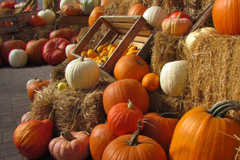 Risultati immagini per ottobre zucca