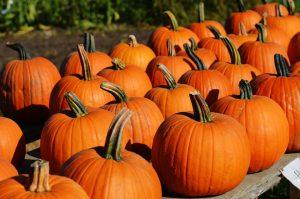 zucca-verdura-di-stagione-di-ottobre