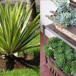 Geranio edera e geranio parigino consigli coltivazione e for Piante da balcone tutto l anno