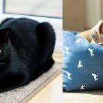 Animali domestici in condominio: nessuna legge può vietarli