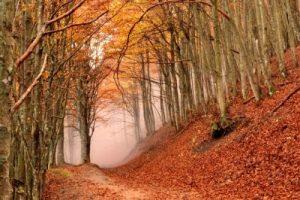 parco toscana durante il foliage in autunno