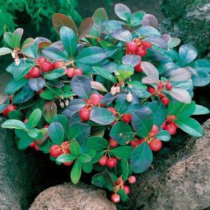 10 fiori da balcone invernali - Fiori Da Balcone