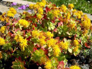 10 piante grasse da esterno che restano verdi per tutto l'anno! - Piante Sempreverdi Da Vaso Resistenti Al Freddo E Al Caldo