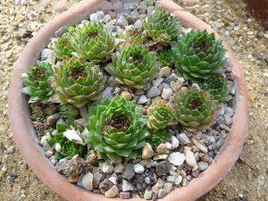 10 piante grasse da esterno che restano verdi per tutto l'anno!
