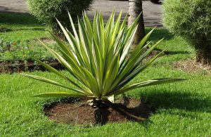 10 piante grasse da esterno che restano verdi per tutto l ...