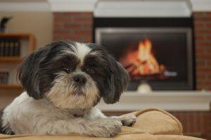animali domestici in condominio nessun regolamento può vietarli