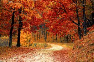 autunno in calabria parco della sila