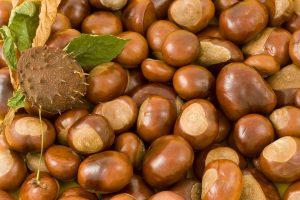 castagne frutta di stagione ottobre